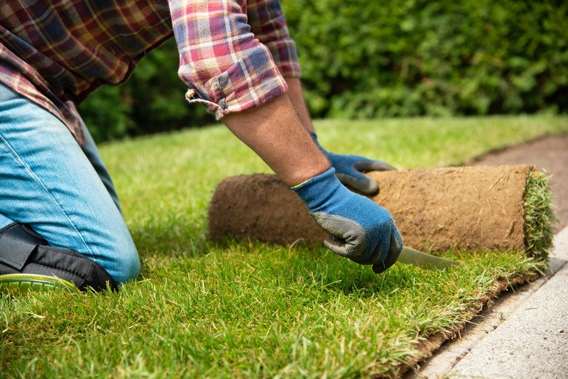 Organic turf installation, cutting and installing the turf
